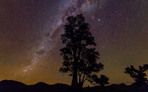 Picture tree, beauty, stars, silhouette, the milky way