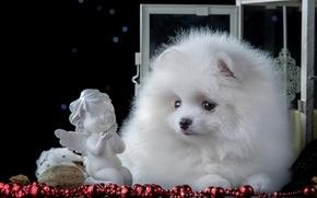 Picture white, angel, cute, puppy, figurine, Spitz