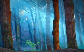 Picture forest, rays, fog, trunks, atmospheric, Wallpaper from lolita777