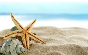 Wallpaper sand, sea, beach, shore, shell, summer, beach, sea, blue, sand, shore, paradise, starfish, seashells