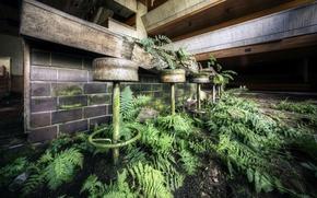 Picture background, bar, ferns