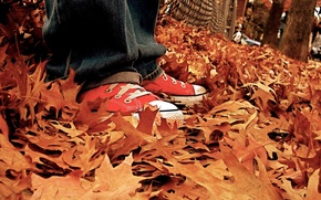 Picture autumn, leaves, sneakers