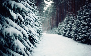 Wallpaper tree, Poland, nature, winter, pine, trail, ate, poland, track, forest