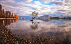 Picture nature, lake, tree