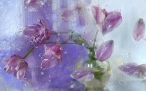 Picture glass, drops, flowers, petals, tulips, composition, Still life