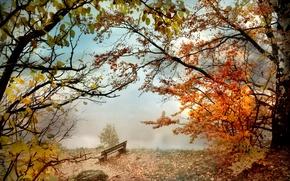 Wallpaper bench, river, Park, autumn