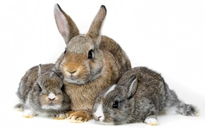 Wallpaper family, rabbits, white background, cubs, Trinity