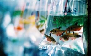 Wallpaper water, package, Fish