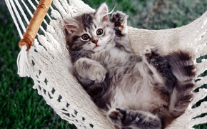 Wallpaper kitty, paws, hammock