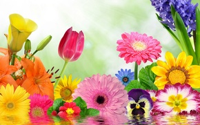 Picture flowers, colorful, flowering, water, blossom, flowers, spring, reflection