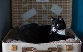 Picture cat, mustache, look, suitcase