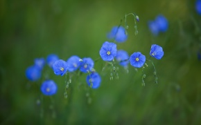 Picture flowers, green, background, blue