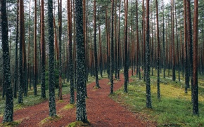 Picture grass, forest, trees, nature, leaves, Estonia, fresh air, Viru Bog, Lahemaa National Park, Viru raba …