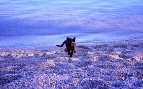 Wallpaper sea, cat, beach
