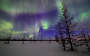 Picture the sky, stars, tree, Northern lights, Night