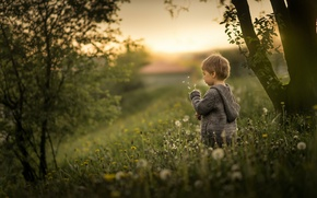 Wallpaper dandelions, boy, nature