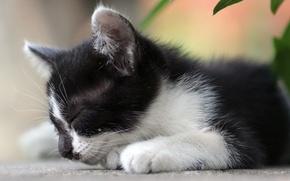 Wallpaper white, kitty, leaves, black