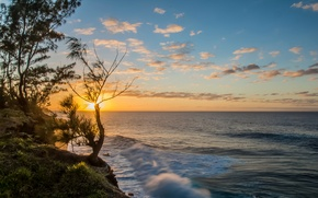 Picture sea, the sky, the sun, sunset, tree, shore