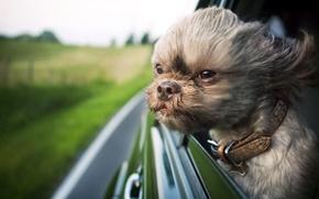 Picture machine, the wind, dog