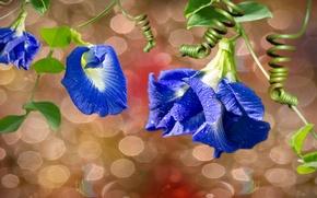 Picture flowers, blue, leaves, twigs.bubbles