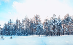 Picture winter, forest, the sky, snow, trees, landscape, nature, pine, the snow, my
