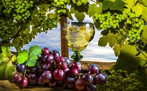 Wallpaper Stemware, Grapes, Wine, grapes, wine, vine