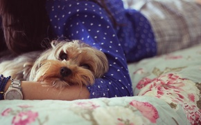 Picture dogs, face, girl, background, Wallpaper, dog, dog, wallpapers