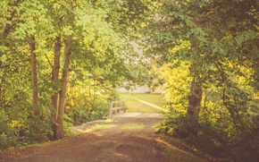 Picture road, trees, bridge, leaves, shadows, sunlight, branches, sunny