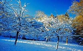 Picture winter, the sky, snow, trees, garden