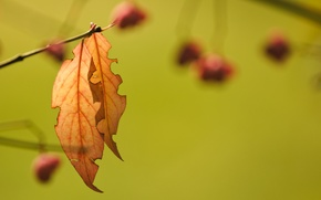 Wallpaper branch, autumn, background, leaves