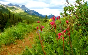 Wallpaper flowers, path, mountains, the sky, grass, landscape