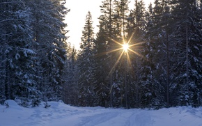 Picture winter, road, forest, snow, trees, the rays of the sun
