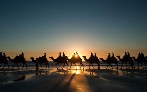 Picture sunset, Wallpaper, shore, coast, wallpapers, camels, caravan