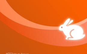Wallpaper orange, minimalism, rabbit