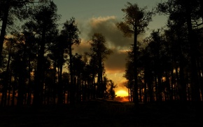Wallpaper clouds, trees, Sunset, the evening, forest