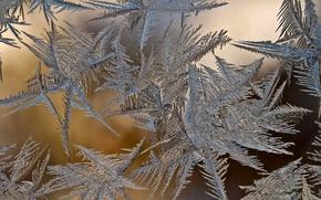 Wallpaper glass, frost, winter