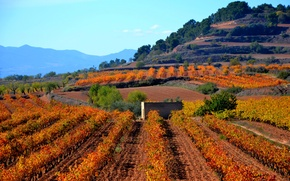 Picture mountains, field, Spain, plantation, Catalonia