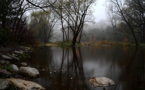 Picture autumn, forest, fog, lake, stones