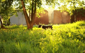 Picture grass, leaves, the sun, trees, sunset, dog, day
