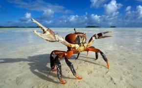 Wallpaper wave, suna, exo skeleton, ghost crab, beach, animal, sky, kumo, tweezers, clouds, crab, island, sea, ...