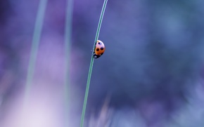 Picture macro, ladybug, beetle, stem, insect, a blade of grass