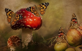 Picture forest, butterfly, rendering, fly, collage, apples, mushrooms, treatment, art, Amanita, Wallpaper from lolita777