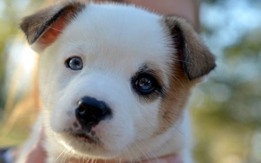 Picture look, muzzle, puppy