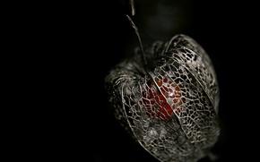 Wallpaper physalis, skeleton, berry