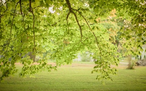 Picture green, grass, trees, leaves, branches