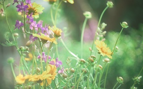 Picture macro, flowers, Wallpaper, yellow, wallpaper, field, widescreen, bokeh, kosmeya