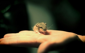 Picture BRUSH, HAND, MACRO, MOUSE, MOUSE, PALM