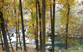 Picture autumn, trees, mountains, river, stones
