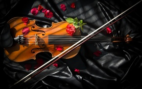 Picture violin, roses, bow