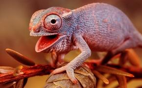 Picture chameleon, branch, lizard, color